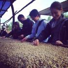 Sustainable Harvest MAP team members wash green coffee beans in Rwanda.