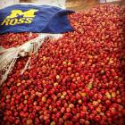 Coffee beans and Michigan Ross in Rwanda - part of a project to explore sustainable coffee production and retail models.