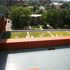 Ross building green roof